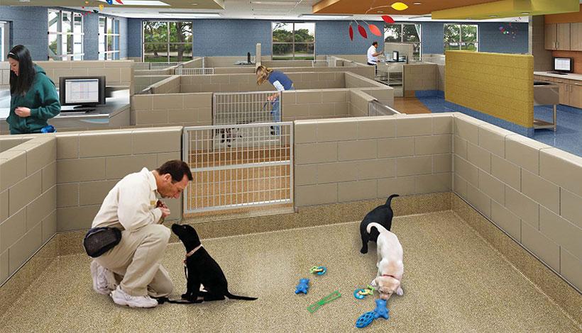 Dog Training Detroit Mi