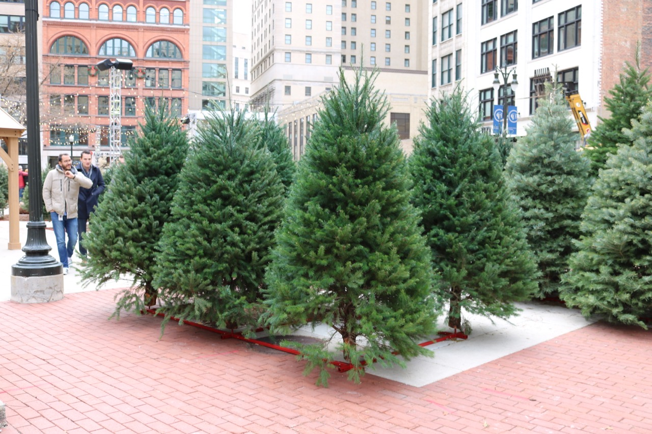 If you live in downtown Detroit you can now pick up your fresh Christmas tree in Capital Park.